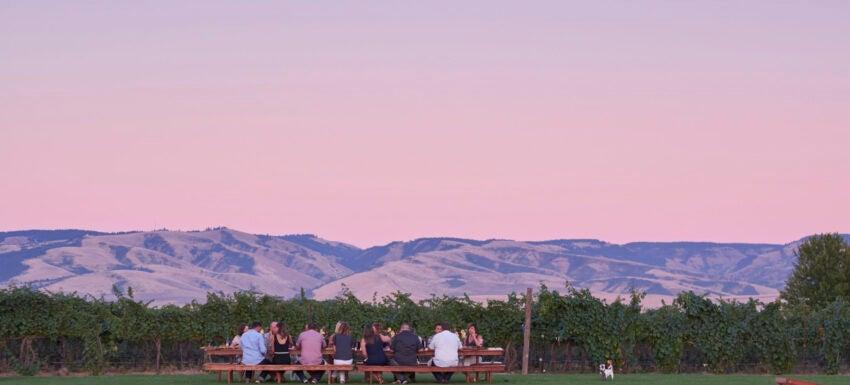 Dinner in the vineyard 2